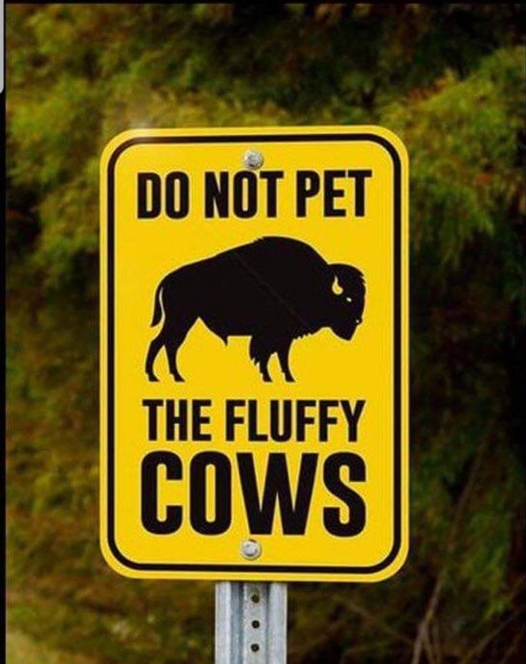 Fluffy cos.jpg